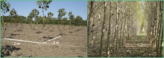 Alasia Franco Orta Rotasyon Ormancılık