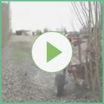 Alasia Franco Video 2 adımlı
